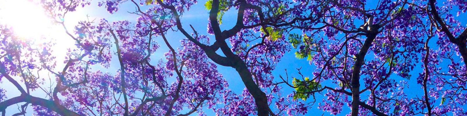 Lessons from my kids #1: Jacarandas are enough